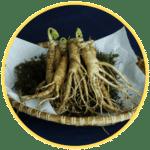 Ginseng Exaviril