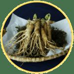 Potenzmittel Ginseng